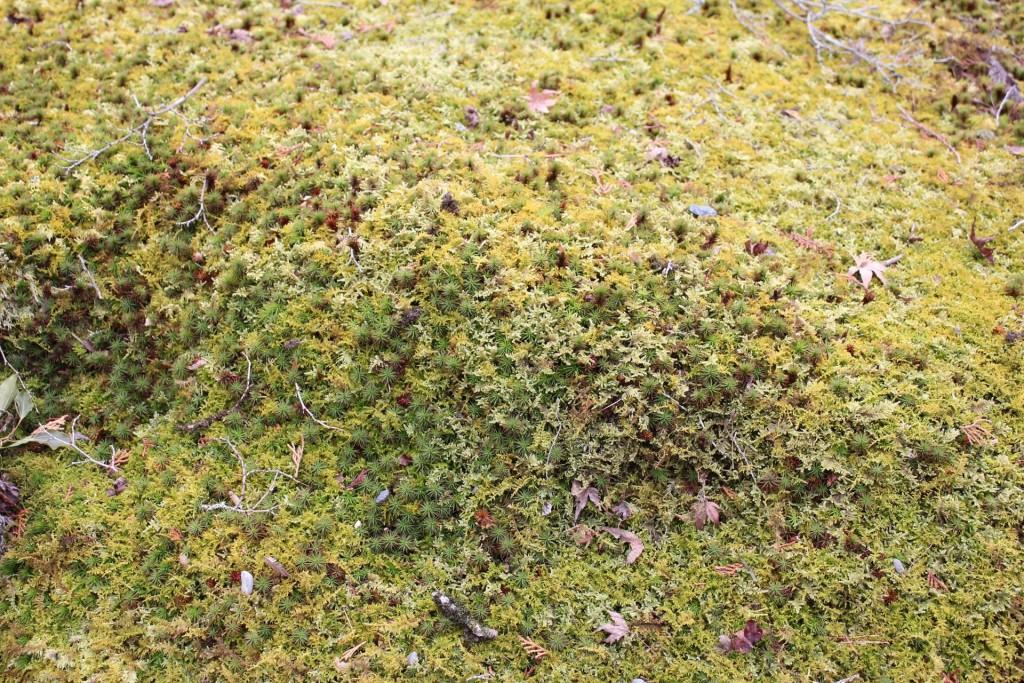 南禅寺の苔