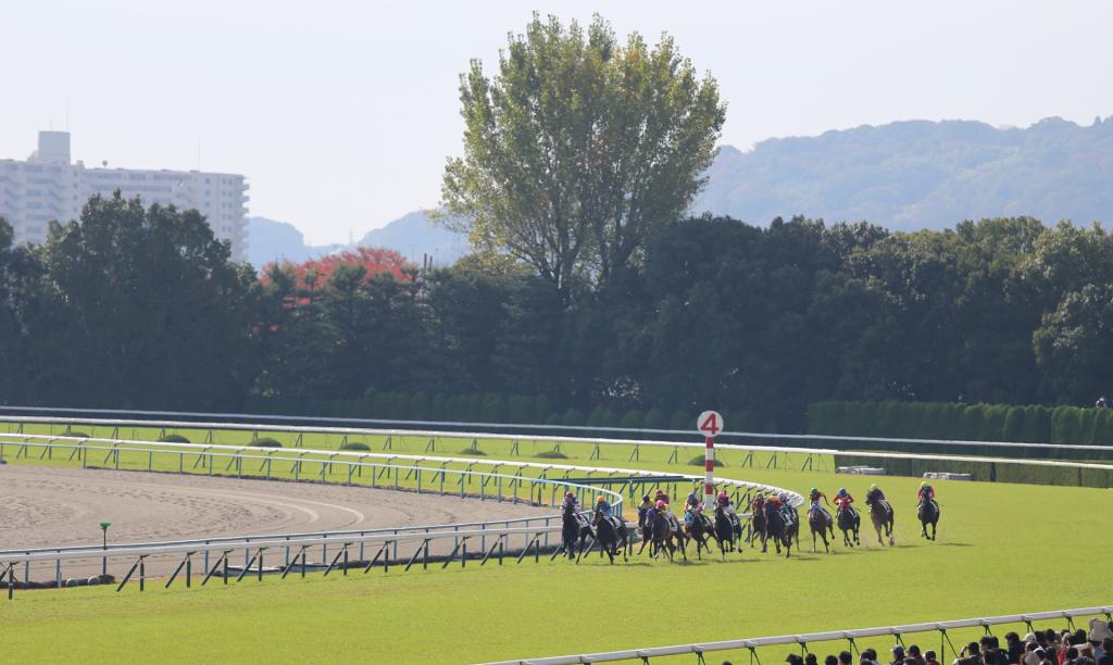 京都競馬場4コーナー